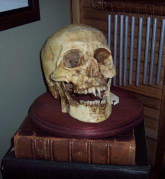 VampSkull.jpg